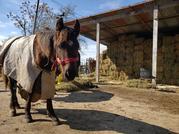 Hipódromo de Palermo y MAA: juntos por los caballos de Ezeiza